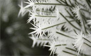 creations-swap-marsha-galyardt-frosty-needles-close